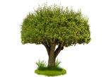 Tree Png Hy