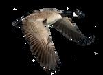 Png Goose