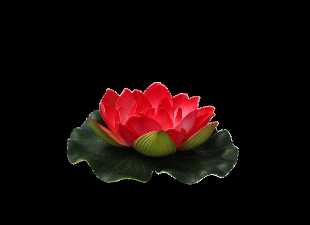Afbeeldingsresultaat voor flower png