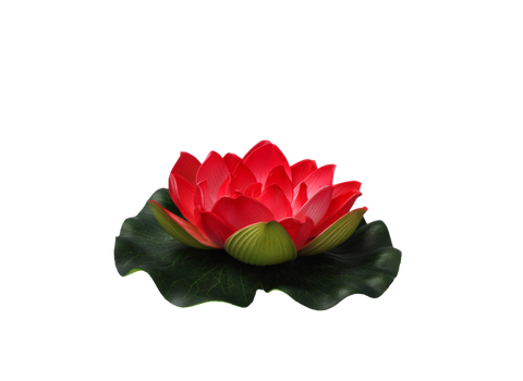Png Flower
