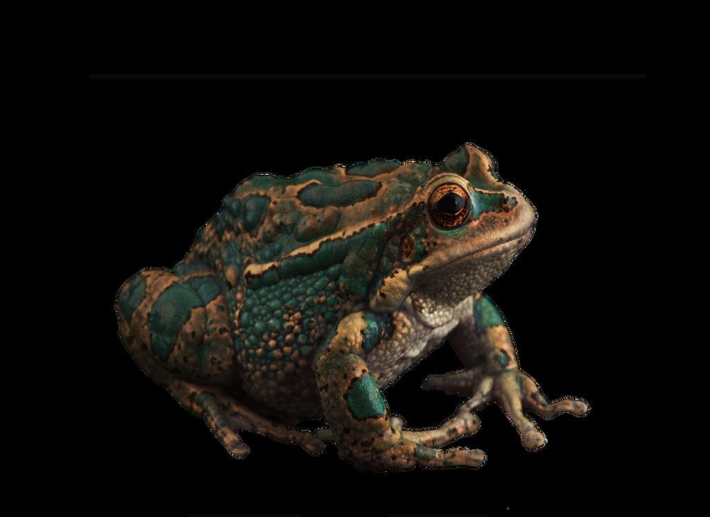 سكرابز طيور وحيوانات صور حيوانات للتصميم صور حيوانات مفرغة بدون frog_by_moonglowlilly-d5qdq81.png