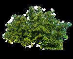 Png Bush 1