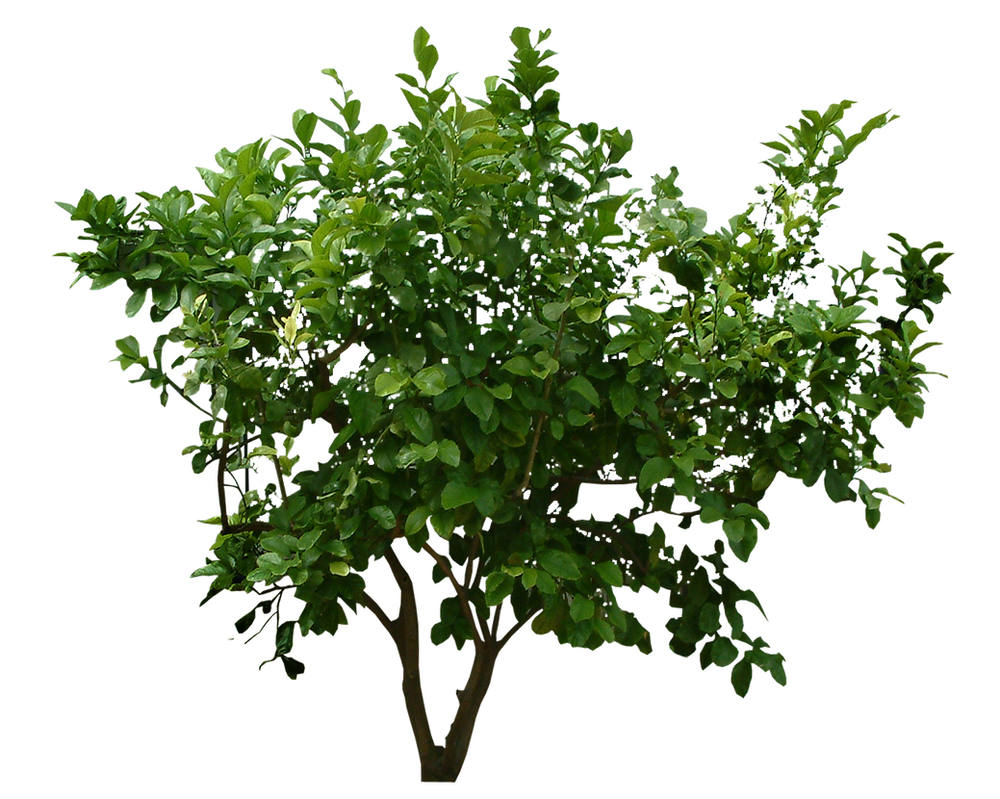 Png Bush 2 by Moonglowlilly on DeviantArt