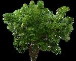 Png Bush 2