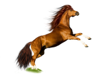 Png Horse 1