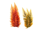 Png Sea Plant