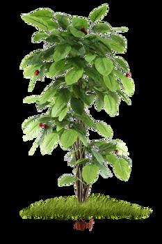 Small Fruit Tree