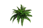 Png Plant C