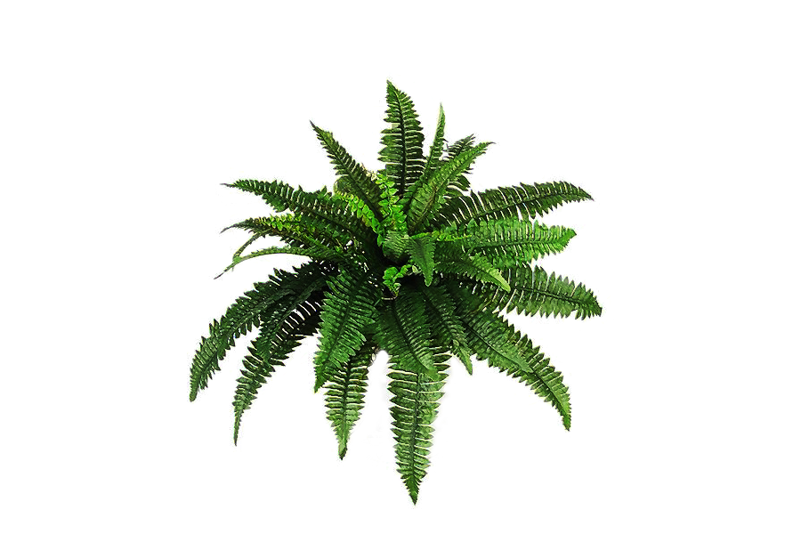 Png Plant C By Moonglowlilly On Deviantart