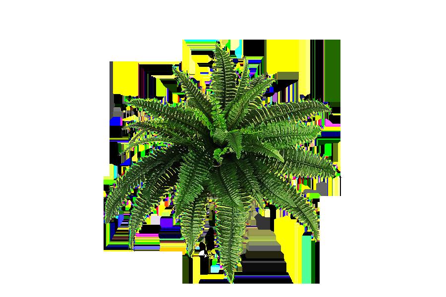 Png Plant C