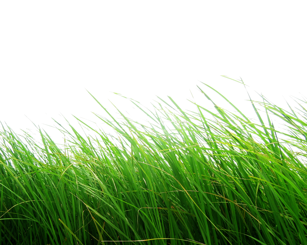 Png Grass by Moonglowlilly on DeviantArt