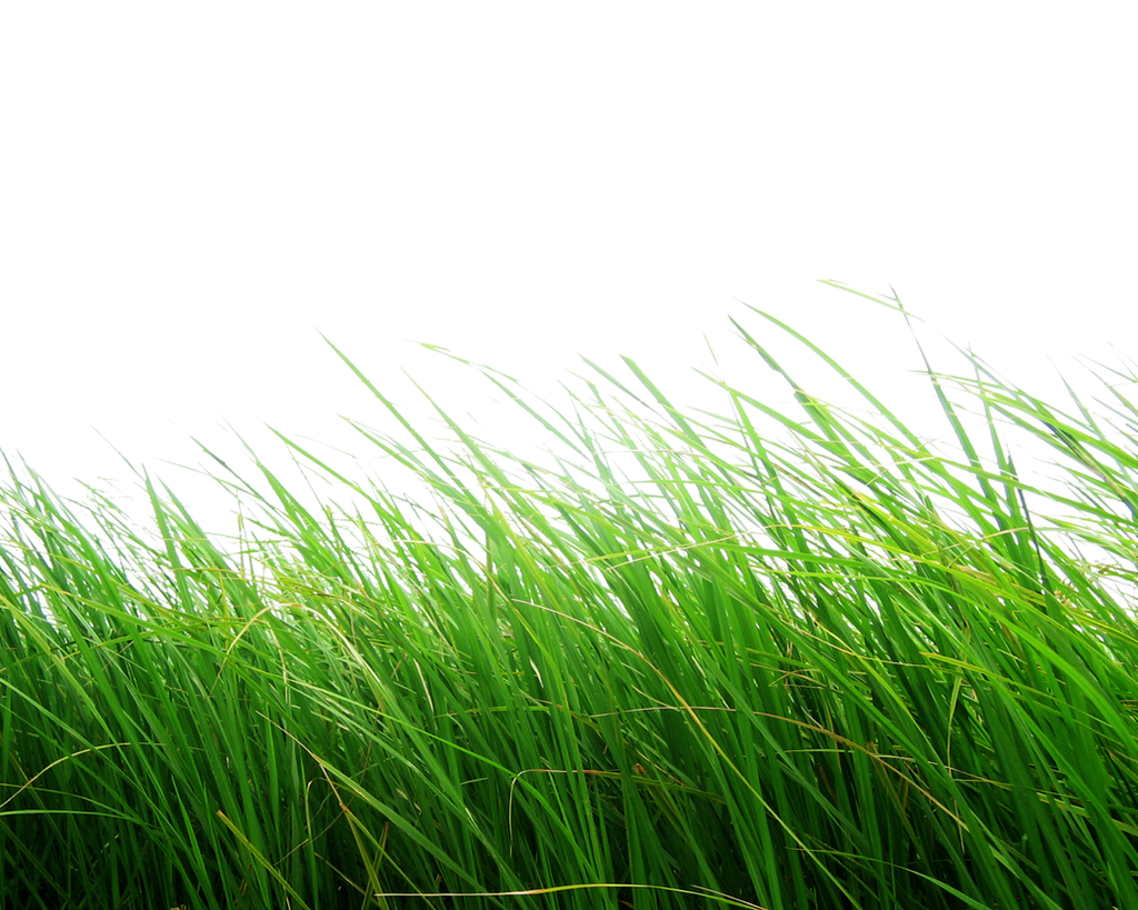 Png Grass by Moonglowlilly