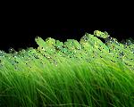 Png Grass