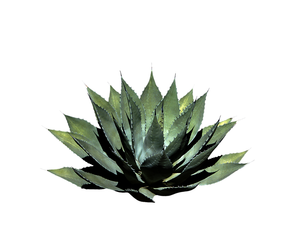 Png Plant by Moonglowlilly on DeviantArt