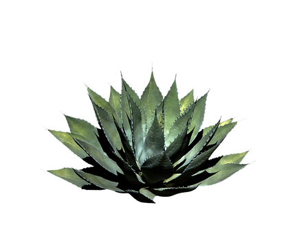 Png Plant