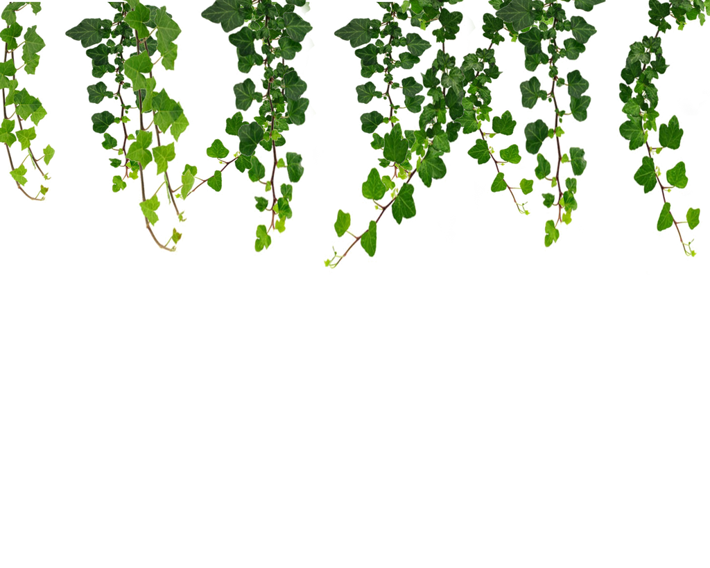 Hanging Vines Png by Moonglowlilly on DeviantArt for Plant Transparent Png  45jwn