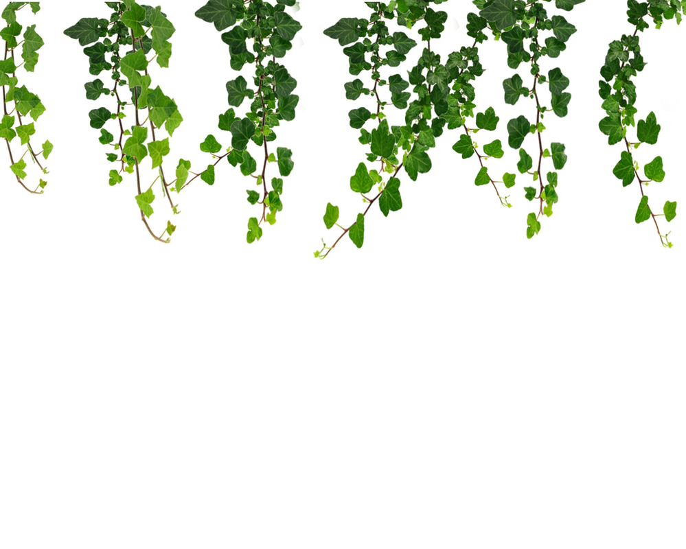 Hanging Vines Png by Moonglowlilly