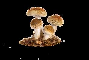 Mushroom Png 5