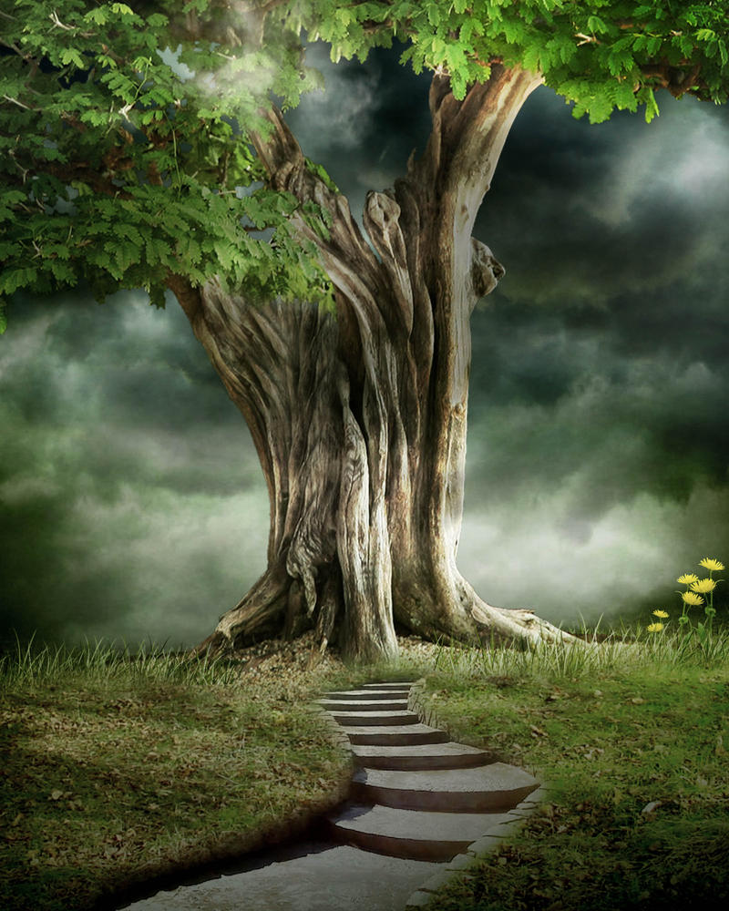 nature wallpaper editing: BG STOCK 78j By Moonglowlilly On DeviantArt