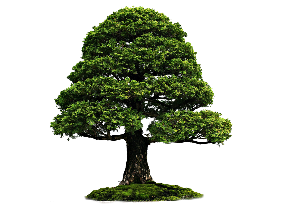 Png Tree 4r