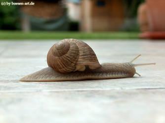Snail on terrace