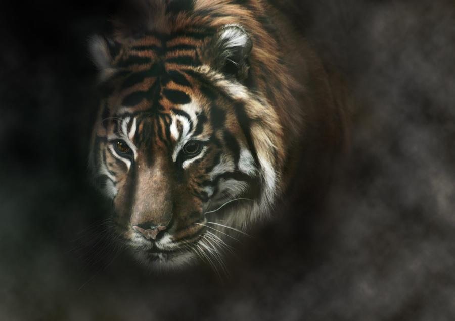 Tigerlilly by crush-crush-crush