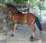 Naughty pony stock tack remove