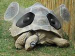 The Turtle sound