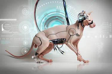 Cyber Sphynx