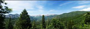 Aspen Grove Landscape
