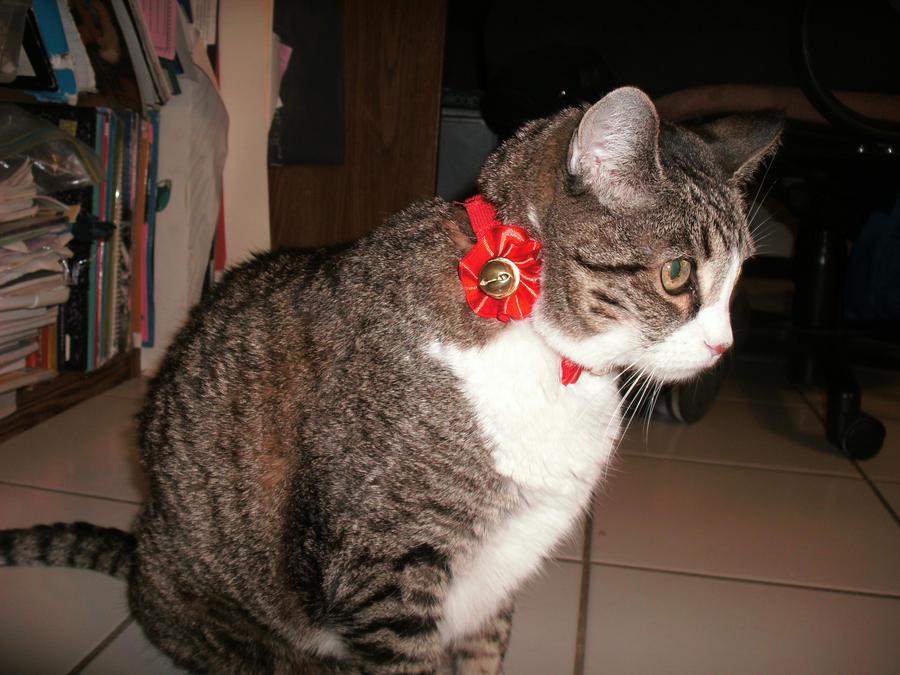 educated cat - photo #20