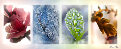 Four Seasons by Miss--Dee