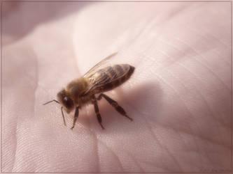 Manual bee by Defyz