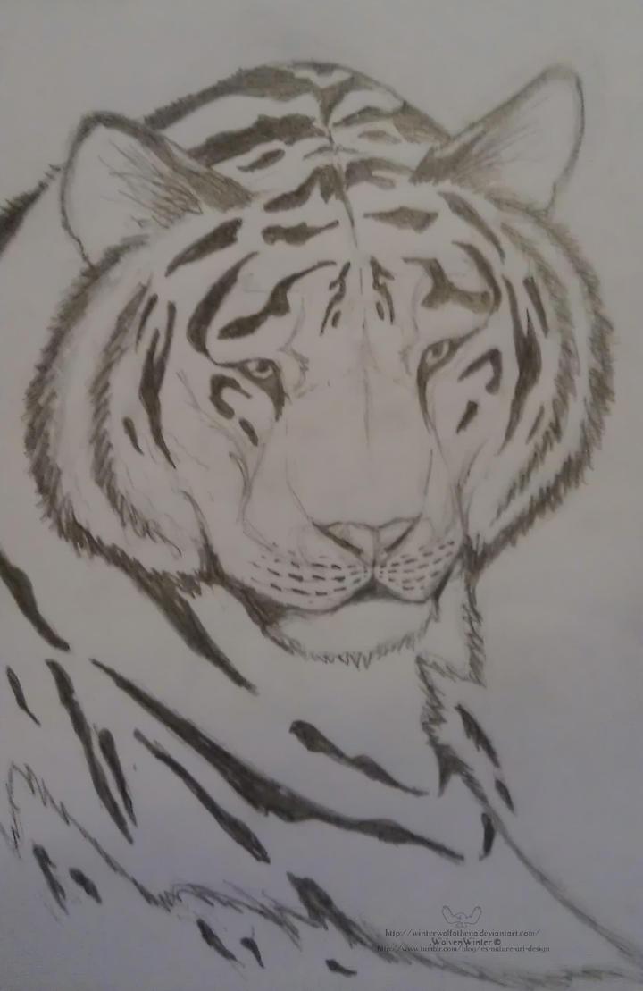 Tiger Tattoo by WildloreCreatures