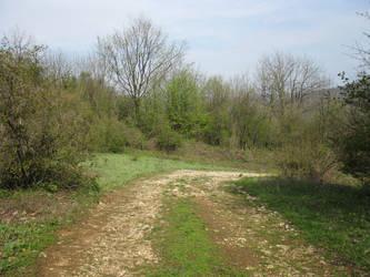 Majdanpek forest 101