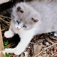 Cute Kitty by Jaavii