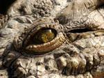 Crocodile Eye by Jaavii