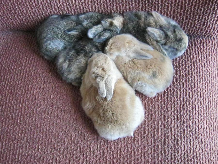 Triangle Bunnehs by KittyFluffyninja