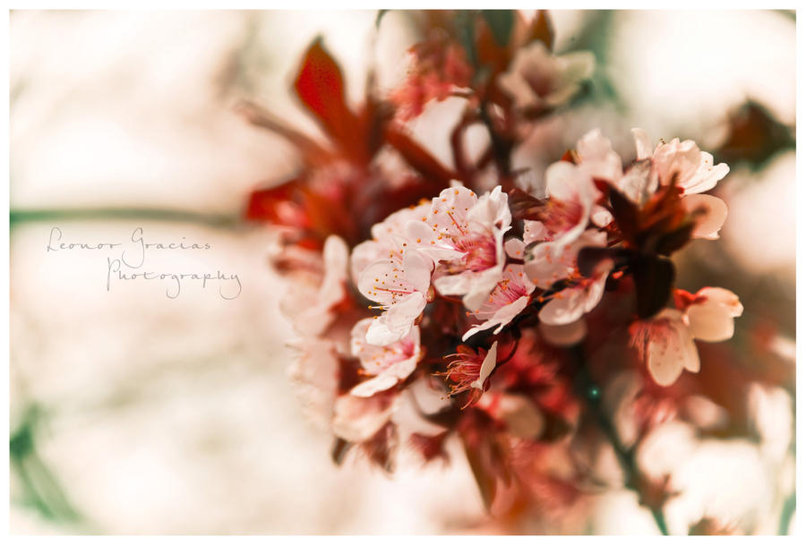 Prunus by LeonorGracias