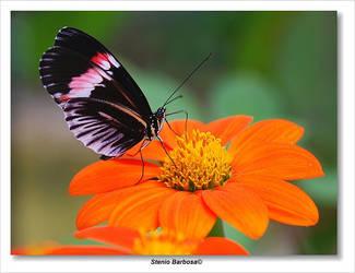 Butterfly... by ScoobyUSA
