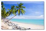 The beach........