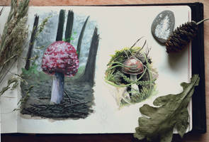 Sketchbook | Mushroom Studies by CinnamonDevil