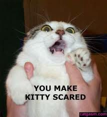 YOU MAKE KITTY SCARED by Acornthekittypet