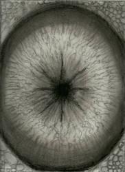 Eye by DMDoug