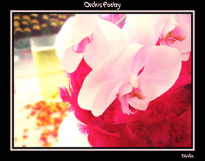 Orchids Poetry