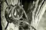 Steel Knots
