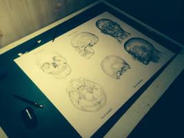 Anatomy visage