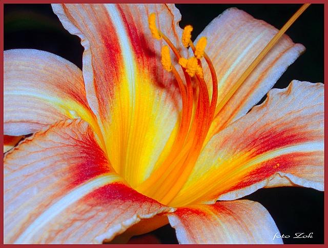 Cvijet by siscanin
