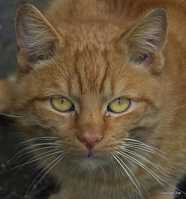 Cat2 by siscanin
