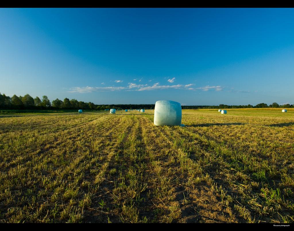 Meadow by siscanin